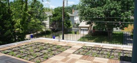 ArlingtonPassivhus-GreenRoof1